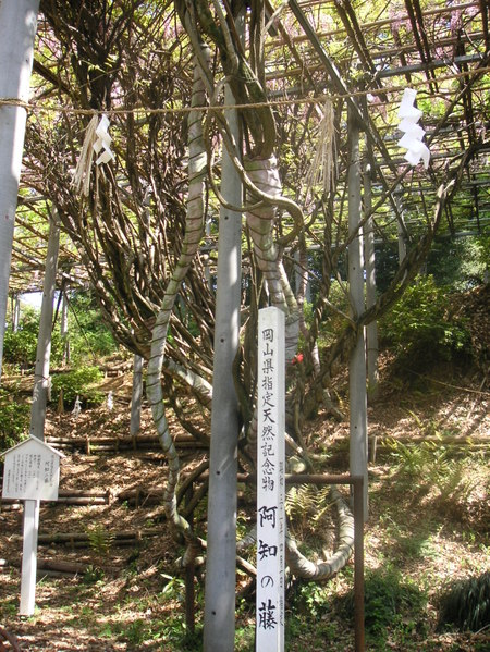Ati_fuji_2_1